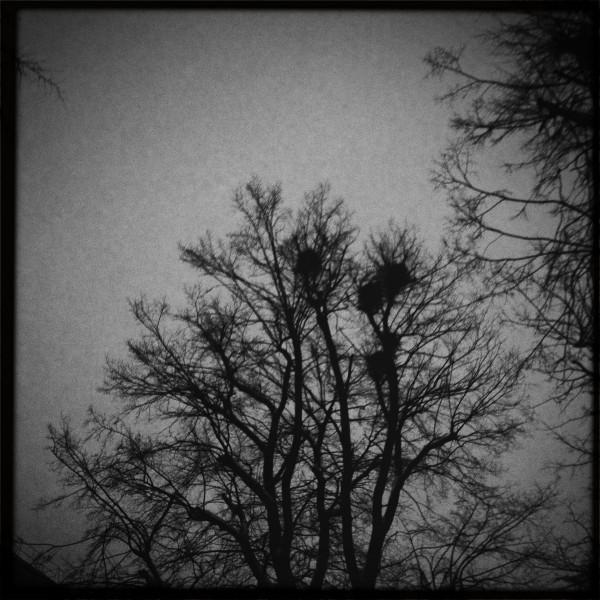Tree844daab3d8ec37e9.jpg